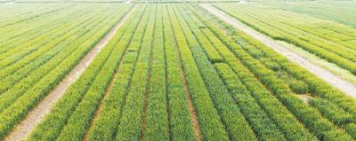确保全年粮食产量保持在一点三万亿斤以上抓好春耕春管 夯实丰收基础