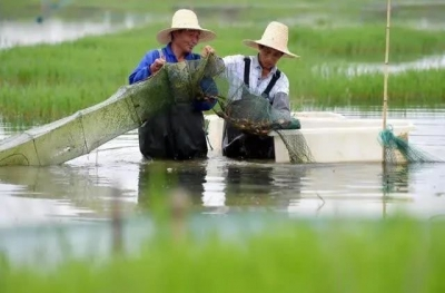 """丹徒区农业农村局:把""""为民""""论文写在池塘边田埂上"""