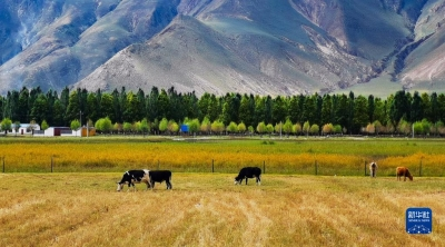 镇江产业援藏又有新成果—— 西藏达孜:小眼镜,大产业,优生活